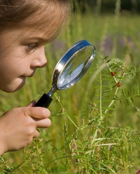 Боязнь насекомых у детей