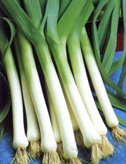 Лук-порей: свойства, состав, применение в кулинарии
