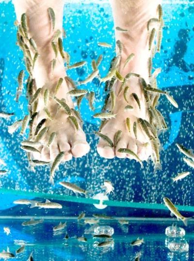 Пилинг рыбками Гарра руфа